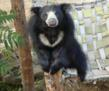 Explore Blog: Zoo Boises Work With Sloth Bears